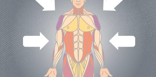 Recursos para aprender el cuerpo humano