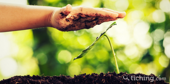 Dia Medio Ambiente | Tiching