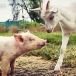 Empatía animal en las aulas: ¡súmate al cambio!