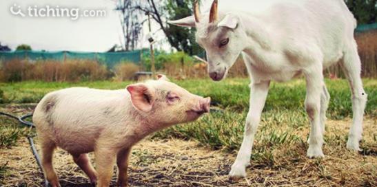 Empatia animal |Tiching